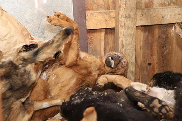десятки умерших животных в концлагере дружок